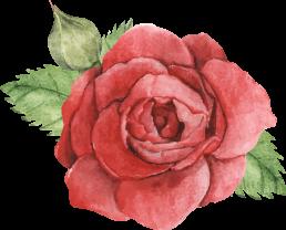 Draw_Rose