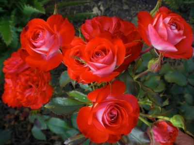 Planten un Blomen 1