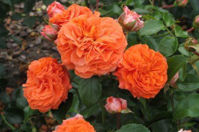 Orangerie 1