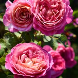 Centenaire de L'Hay les Rose 4