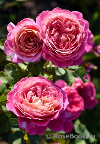 Centenaire de L'Hay les Rose 1
