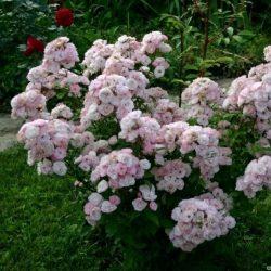 Bouquet Parfait 7